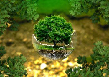 Экологические инвестиции: почему важно вкладывать в чистоту окружающей среды