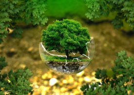 Environmental investments – why is it important to invest in environmentalism