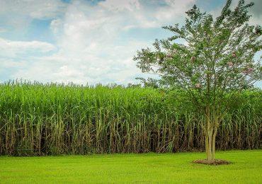Процесс производства сахара в Таиланде упал до 90 млн тонн
